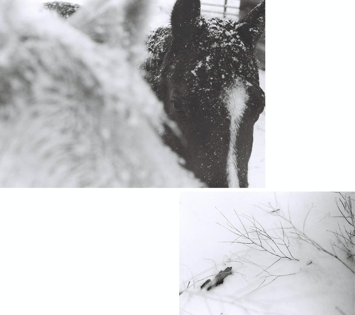 April Larivee - VLXL_Larivee_Luepke_Winter_Warmth4