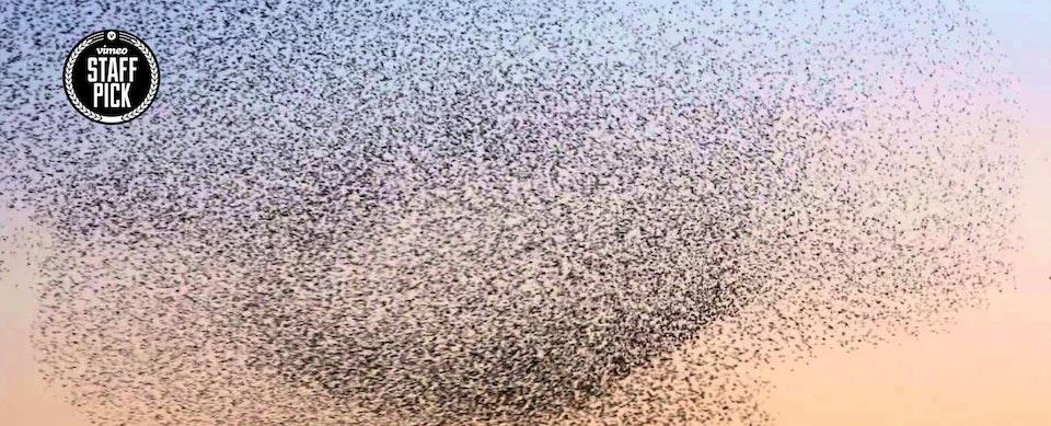 Motion Palace - A Bird ballet