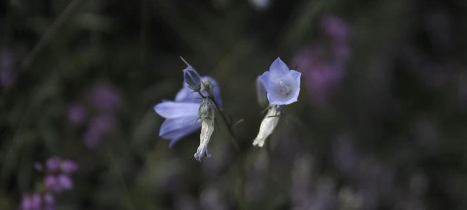 GARR FLOWER -