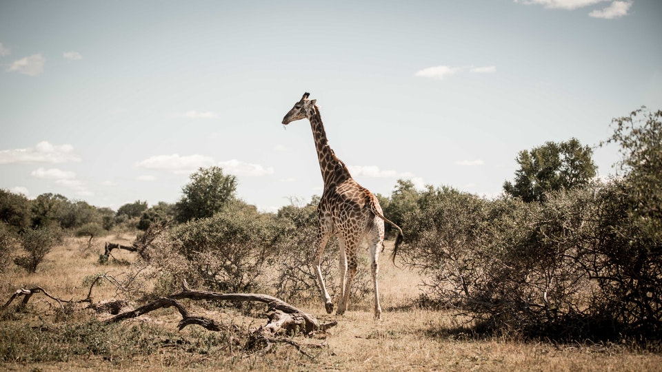 Skyscanner | South Africa 2X5A1585