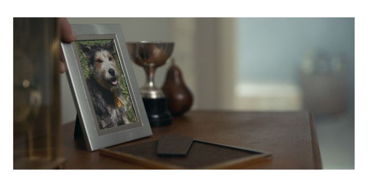 #raucousbraggingrights for Adam Gunser - Gold, Silver - Cannes goes bow WOW for Pedigree / Colenso BBDO Auckland!
