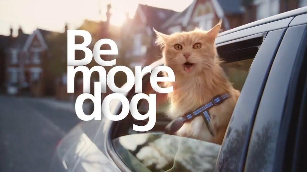 O2 - Be More Dog