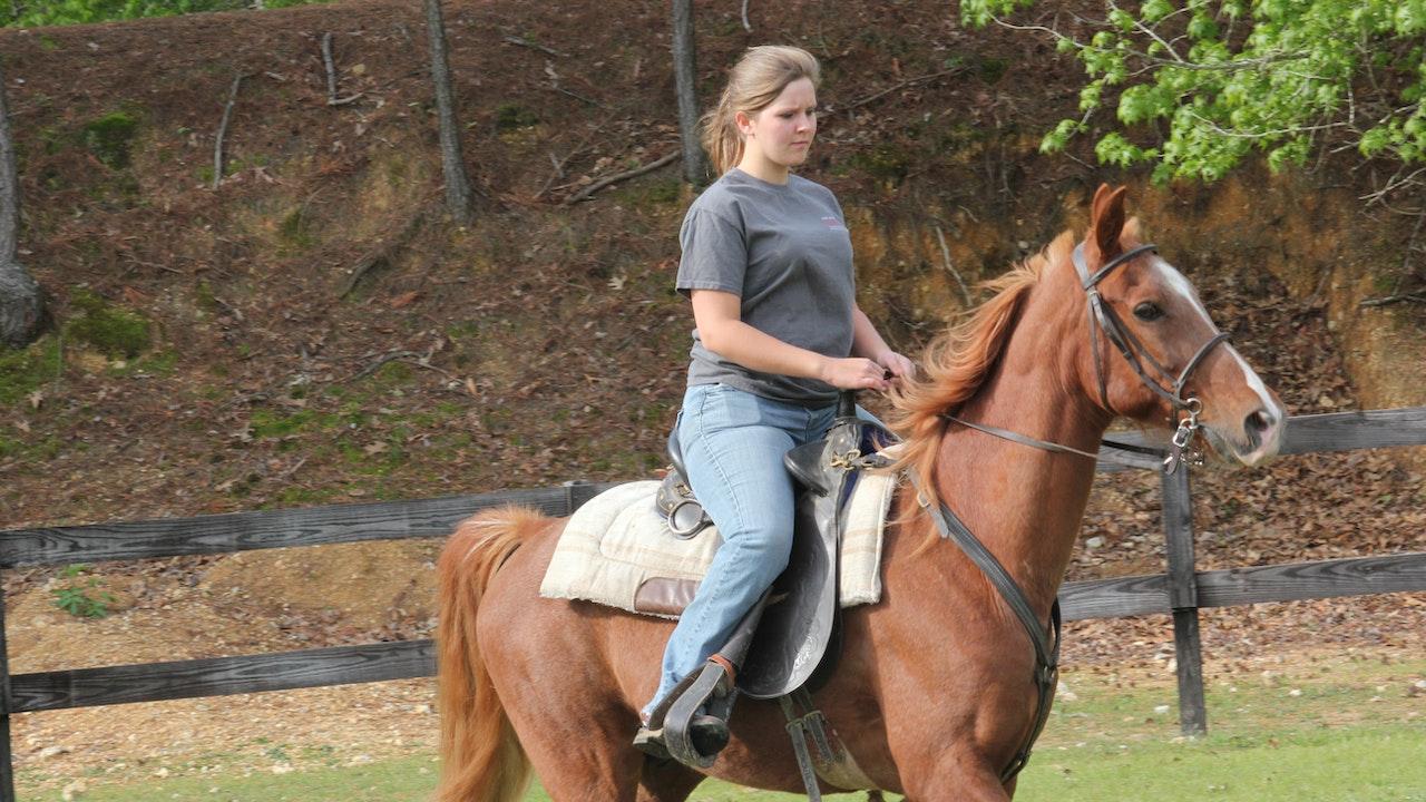Horse Play -