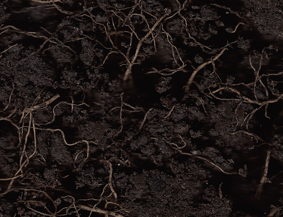 Mutterboden