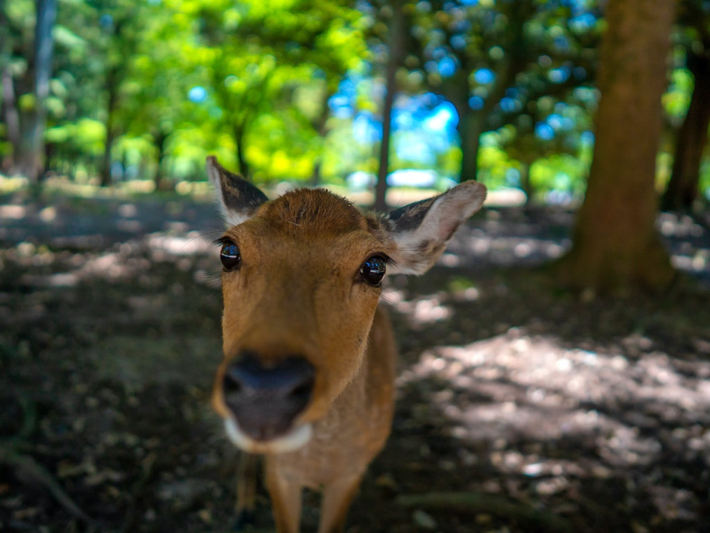 Nara Park 奈良公園