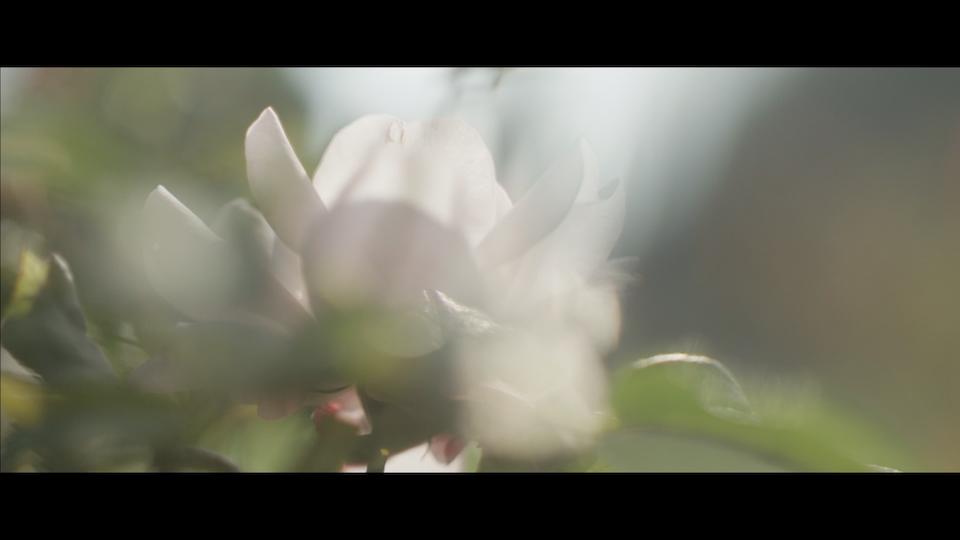 BELLA & AZZI - Le parfume de ma vie Screen Shot 2017-11-20 at 12.28.37 AM