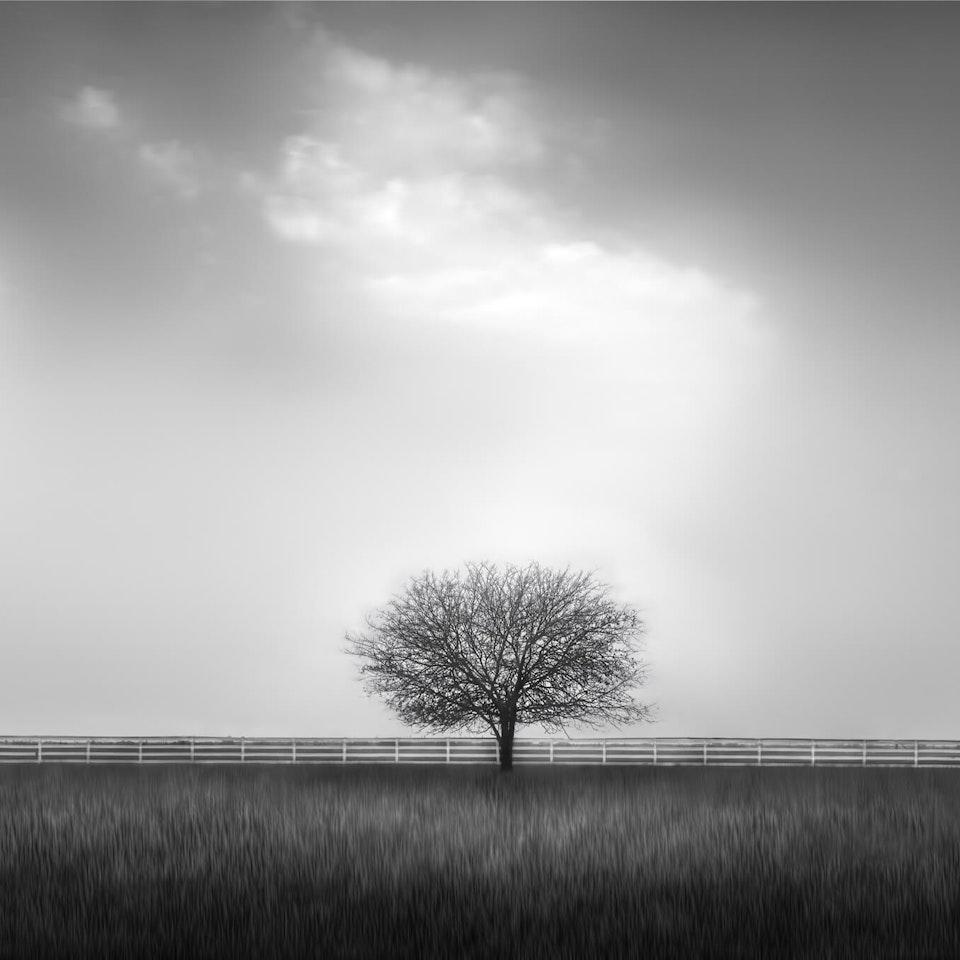 ANDREA JONES - Landscape