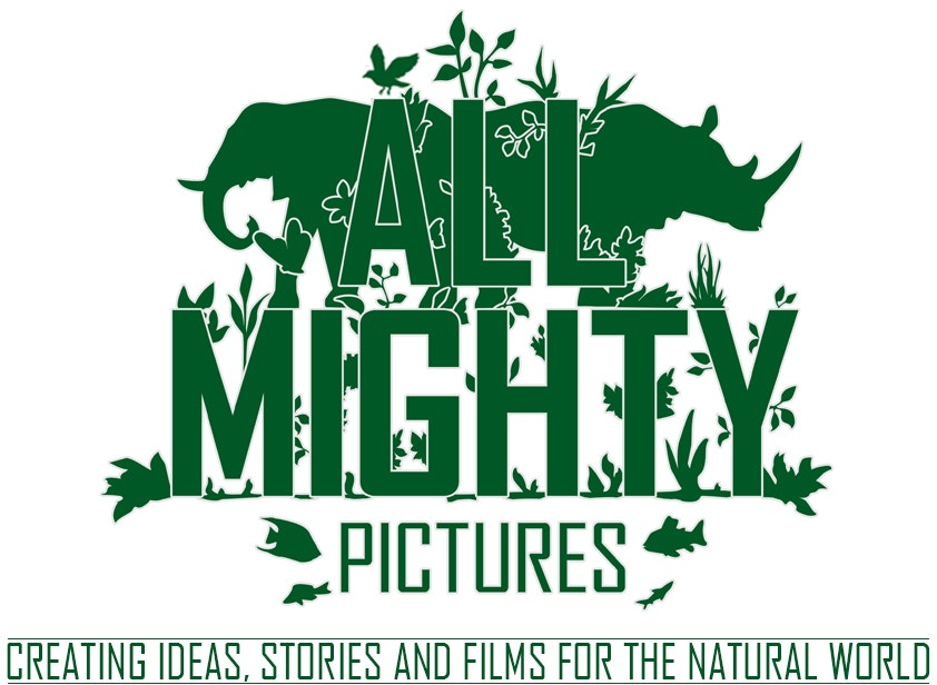 All Mighty Pictures