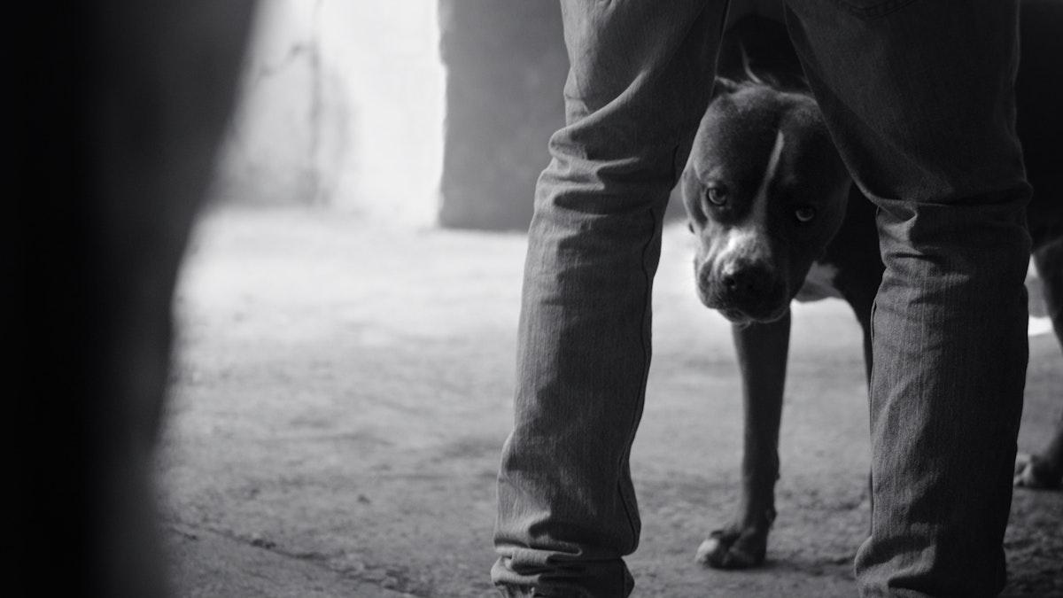 World Animal Protection - Brand Film