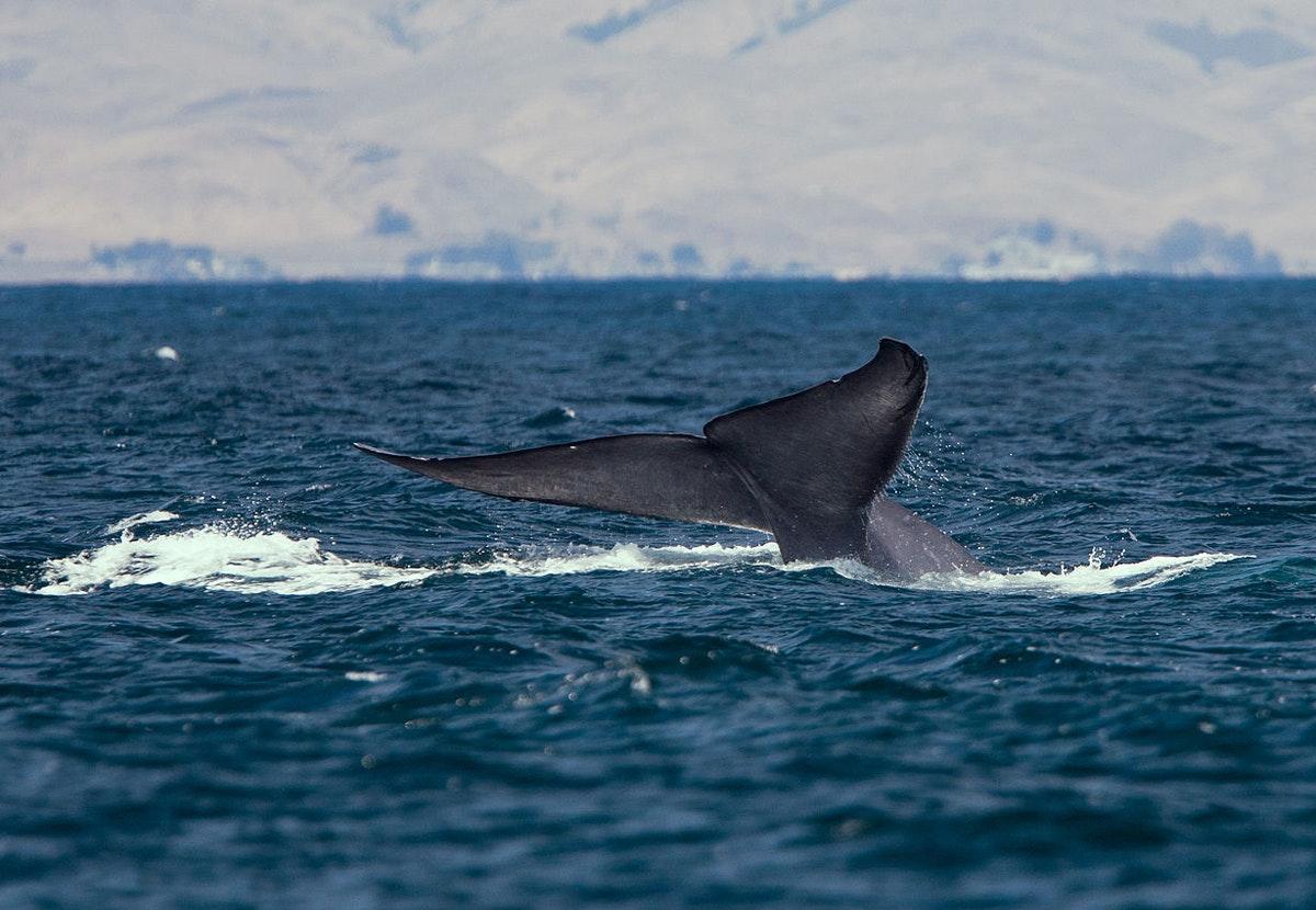 NEWS - a whale of a comeback