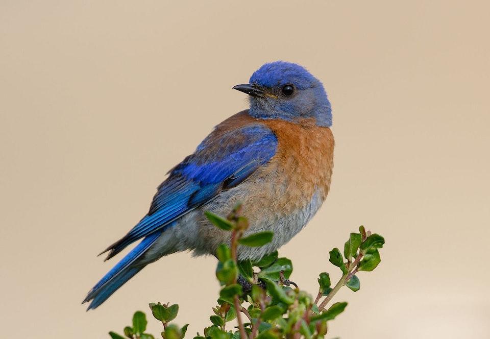 NEWS - bluebird