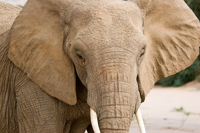 UK Still Trading In Ivory After The 2018 Ban
