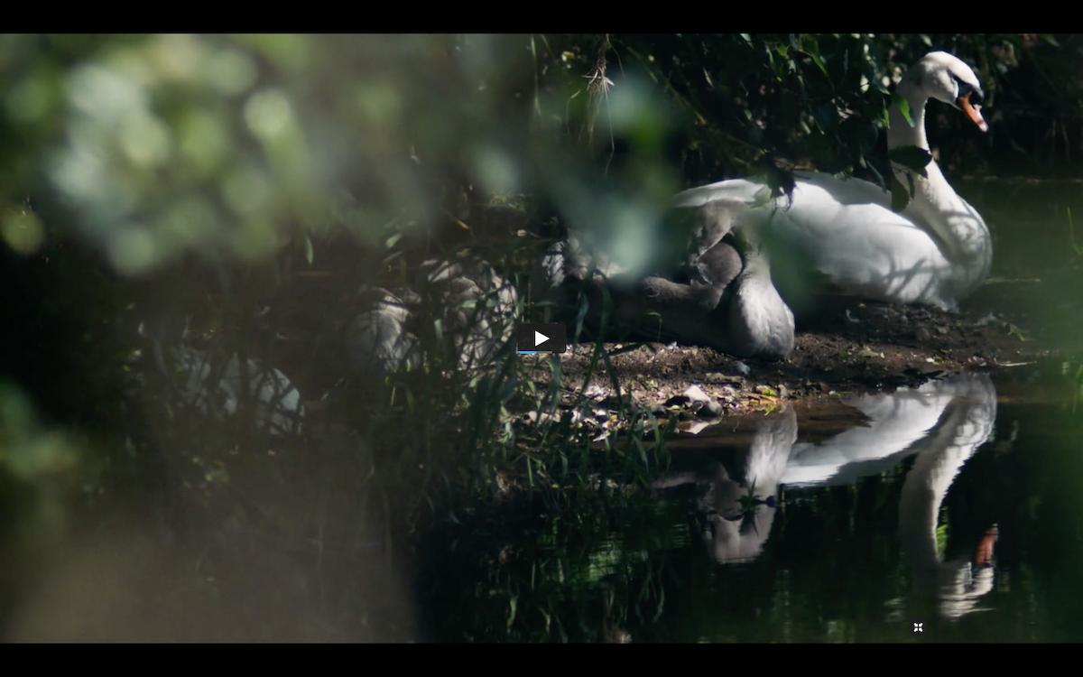 Our New Film - Devon Wildlife Trust