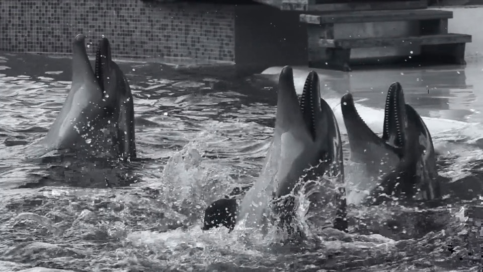 World Animal Protection - Dolphin Campaign