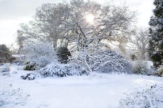 Beth Chatto - Winter