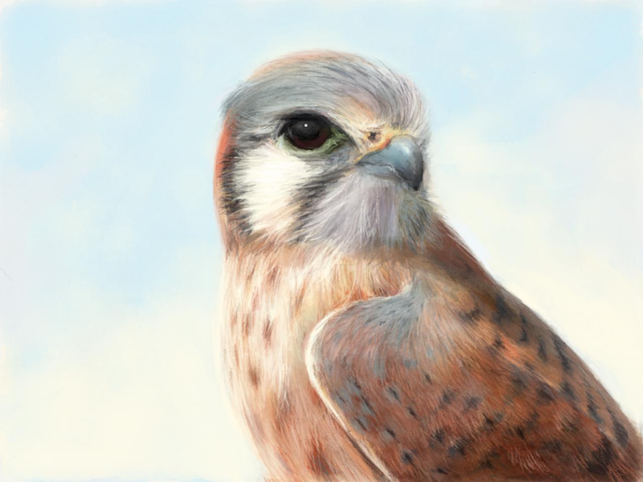 BIRD STUDIES  [Digital painting]
