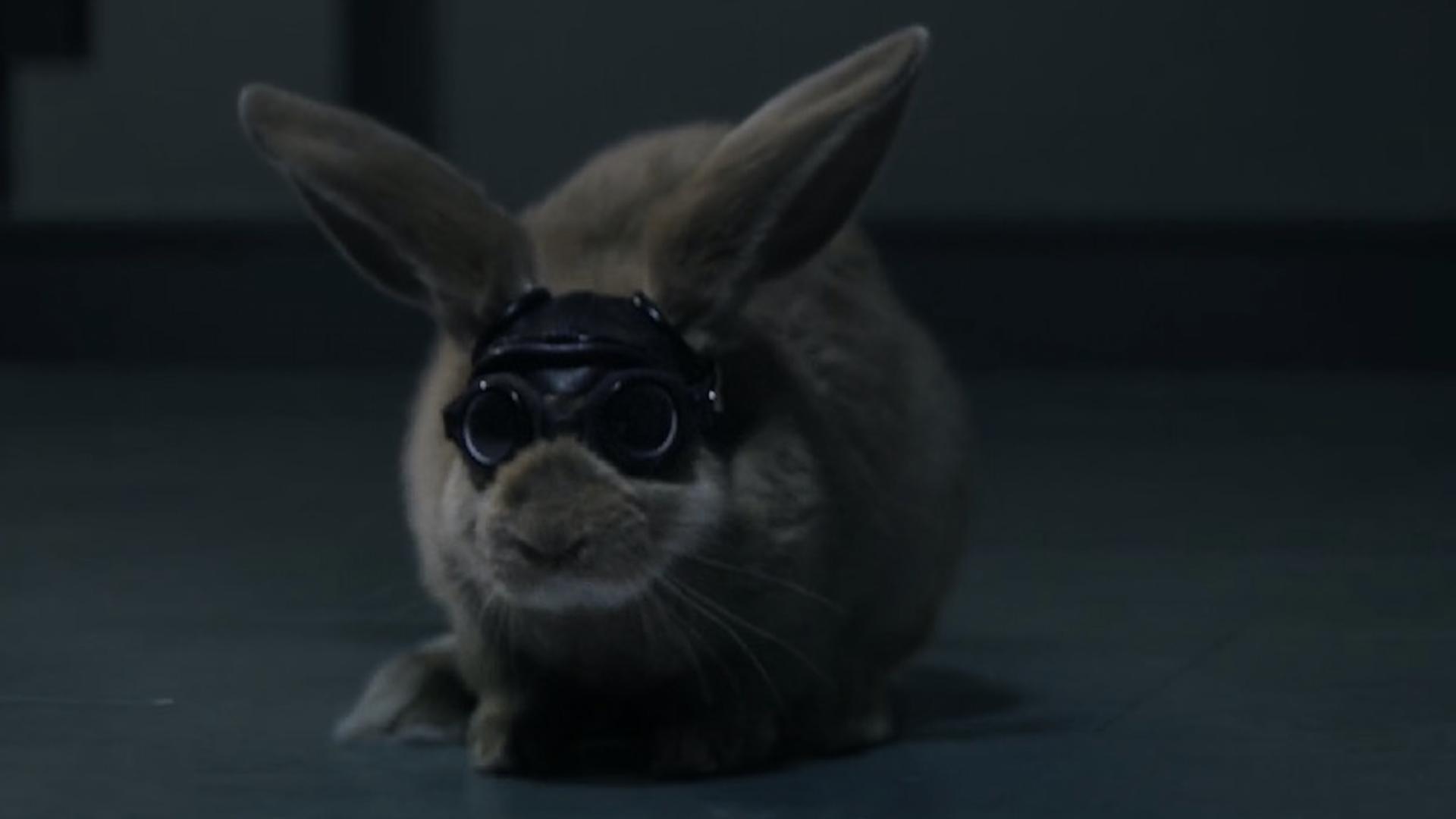 volkswagen - rabbit