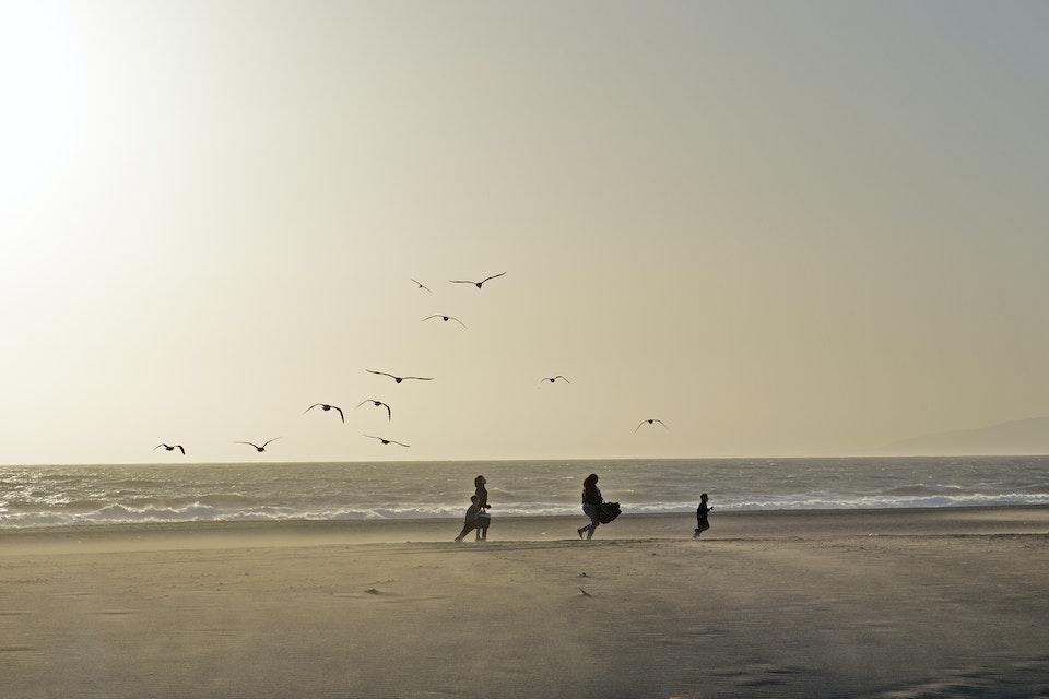 Landscapes - family_bird_beach