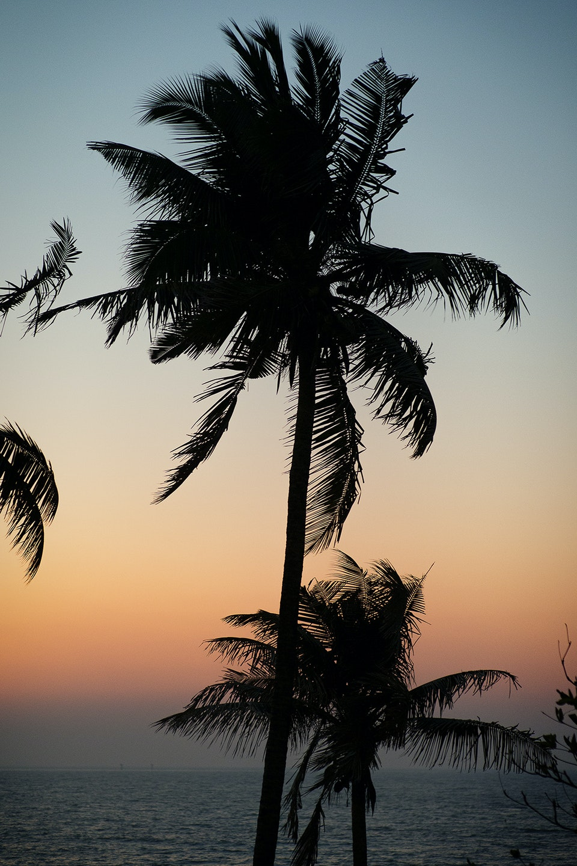 Landscapes India_palm_R