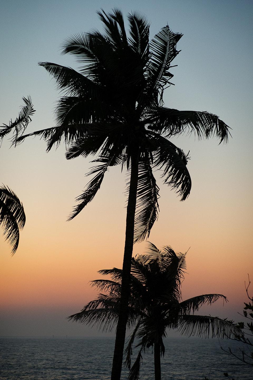 Landscapes - India_palm_R