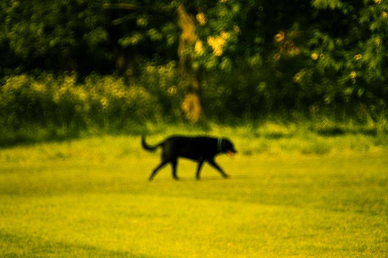 Photography / animals -