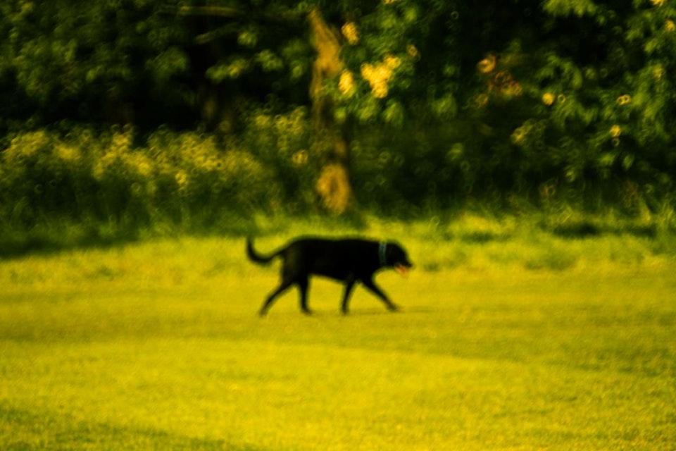 Photography / animals