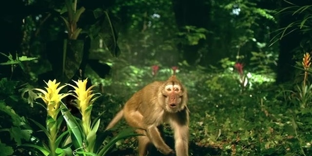 Animal Planet - Baboon - Ident