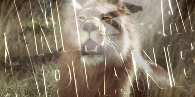 Animal Planet - Lion - Ident