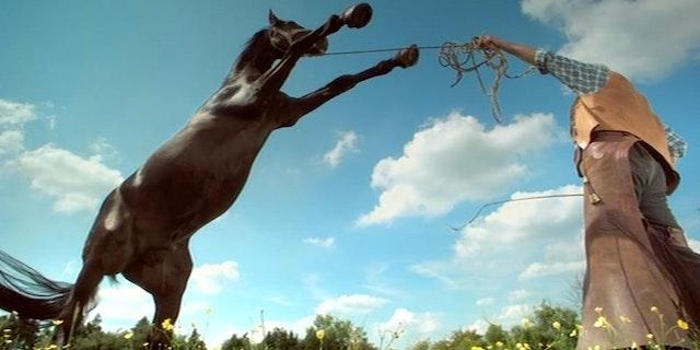 Animal Planet - Horse - Ident