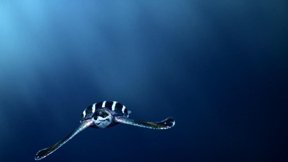 Drop In The Ocean - Drop In the ocean VR