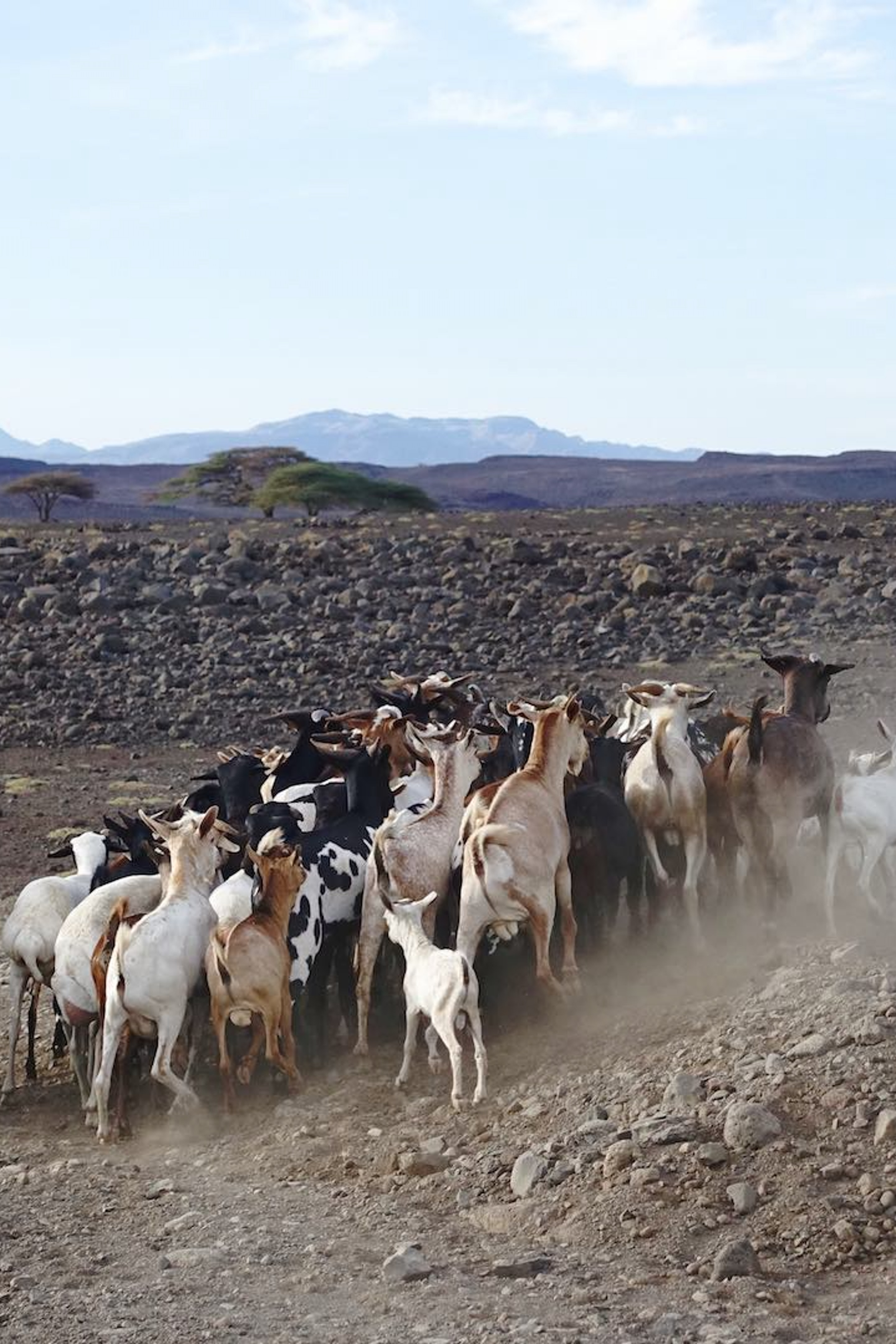 Danwatch report on Lake Turkana Wind Power
