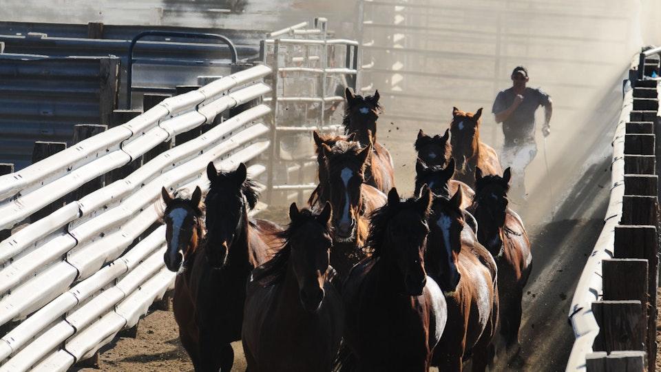 Among Horses and Men, documentary 70 min