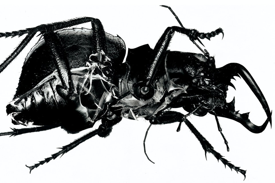 BUG Videos - The Evolution of Music Video - BUG: Massive Attack Special