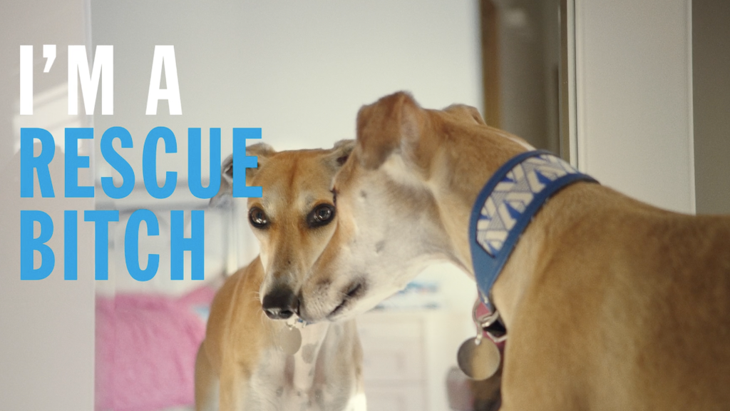 MATEO DIRECTS BATTERSEA CAMPAIGN 'RESCUE IS MY FAVOURITE BREED'