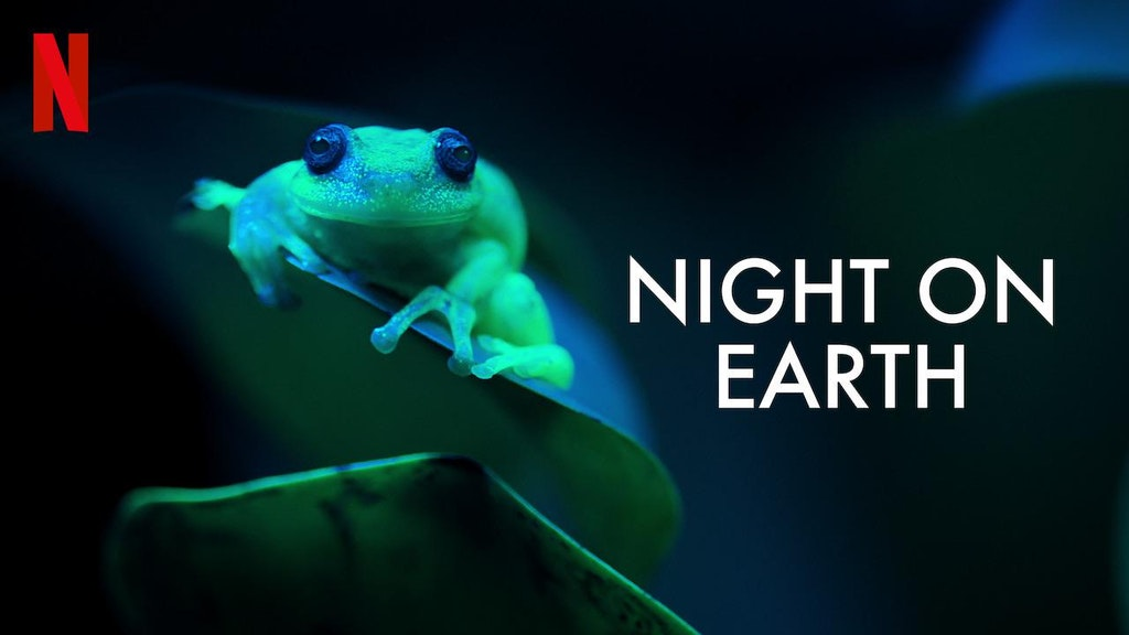 Mateo Willis' latest Wildlife project Night on Earth soon to be released on Netflix
