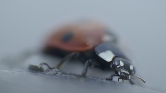 In the Company of Insects - Still 2