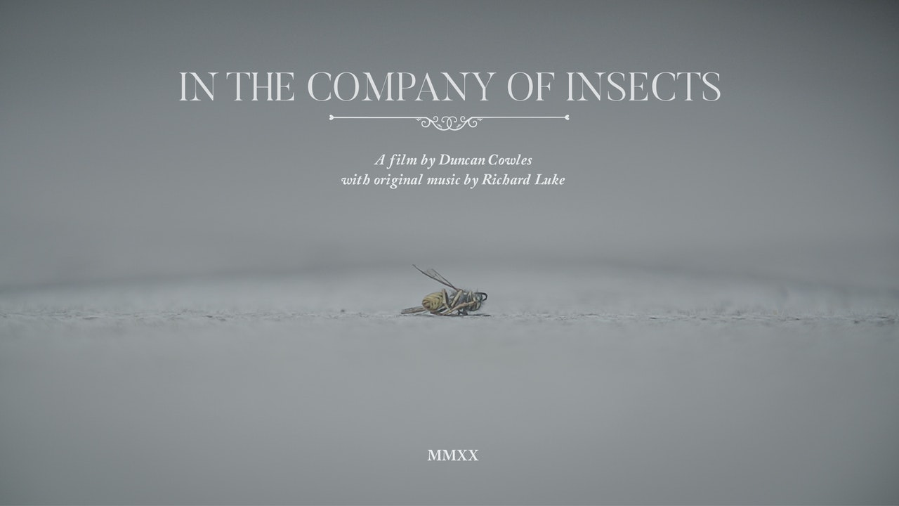 In the Company of Insects