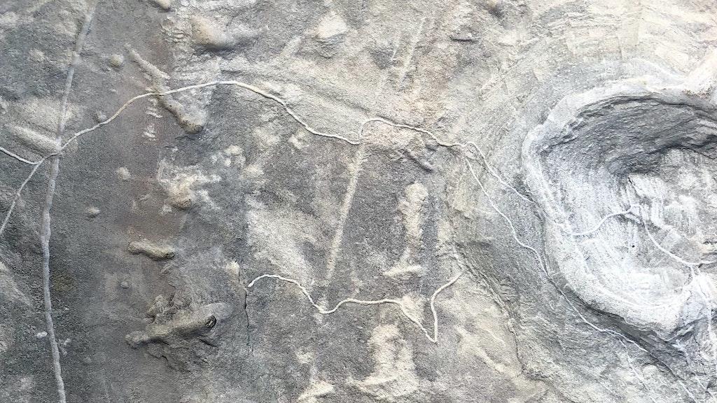 l'oro di pianpicollo selvatico | maurizio cilli