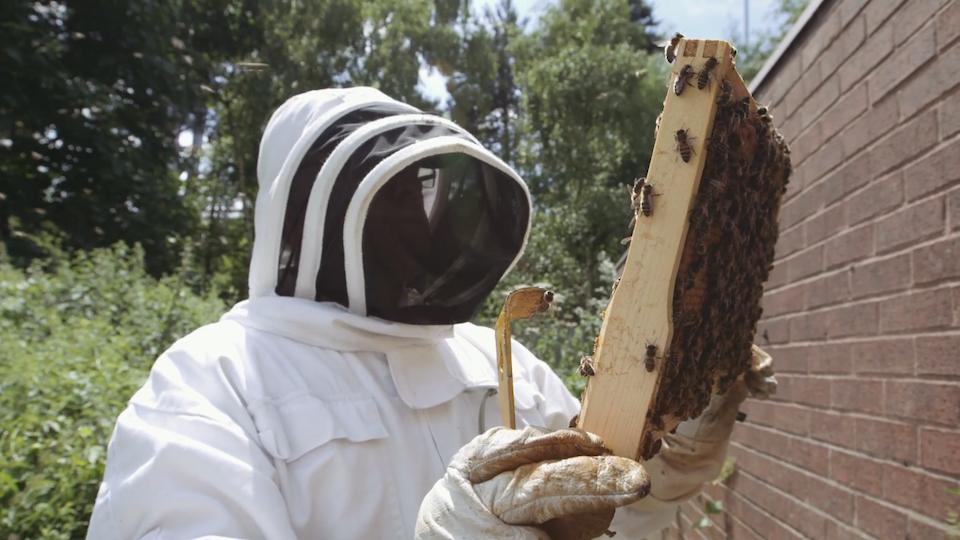 Bee Movies - Multistory