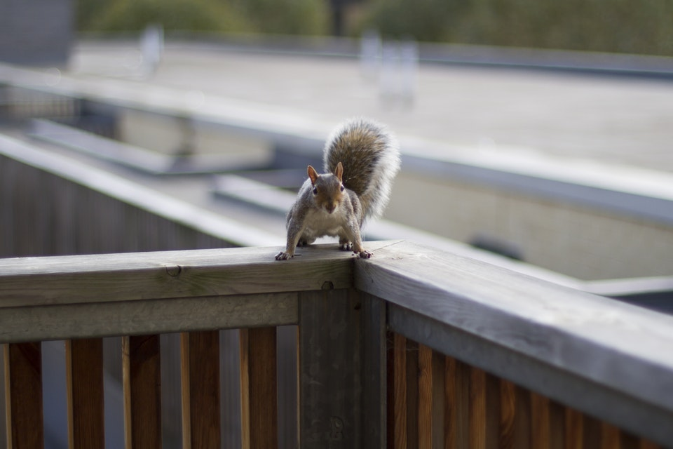 Steve the Squirrel