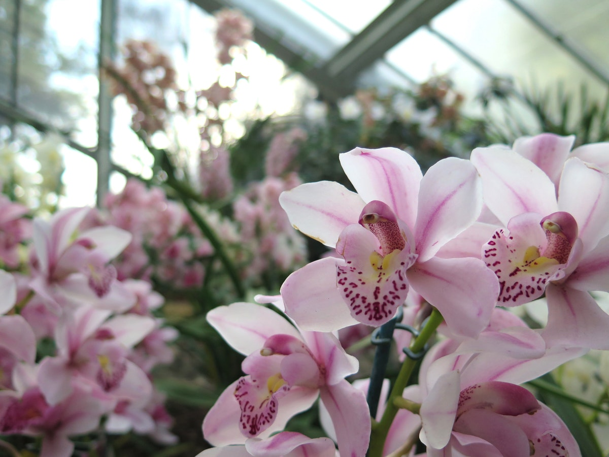 Orchid Festival at Kew Gardens