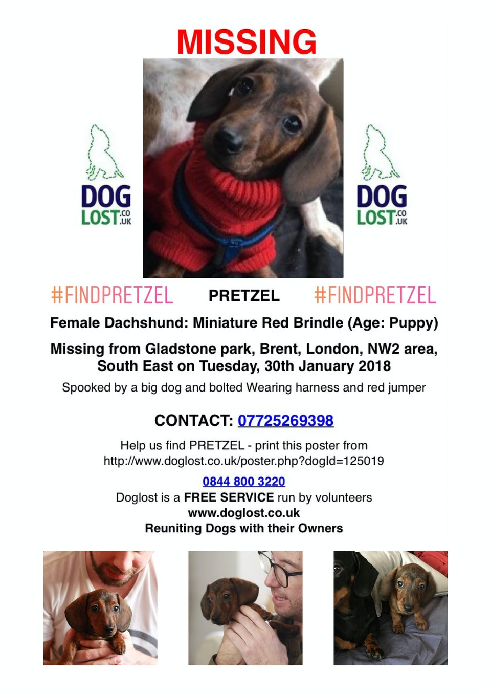 LOST: Pretzel the Dachshund