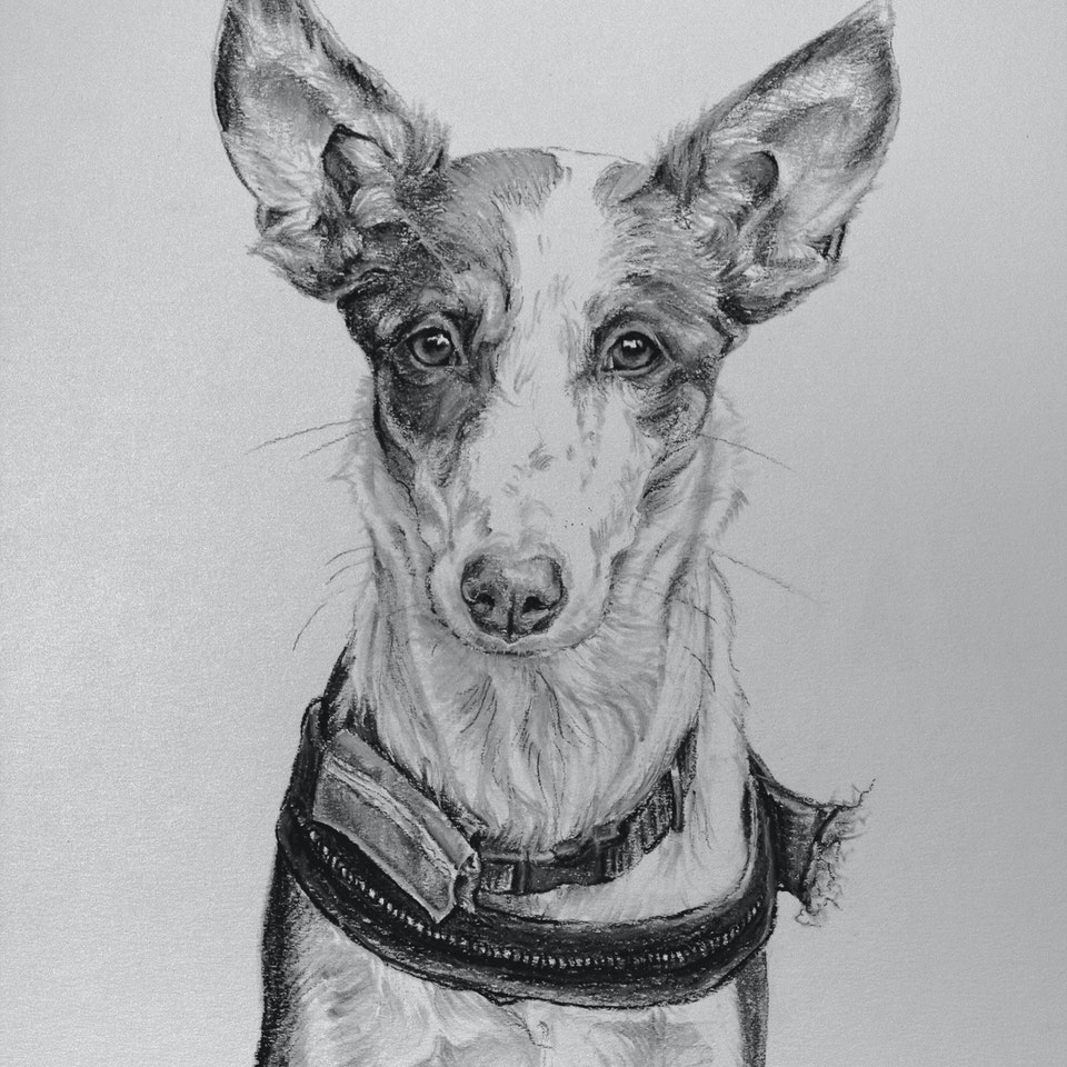 Amy Little Art - Charcoal Studies