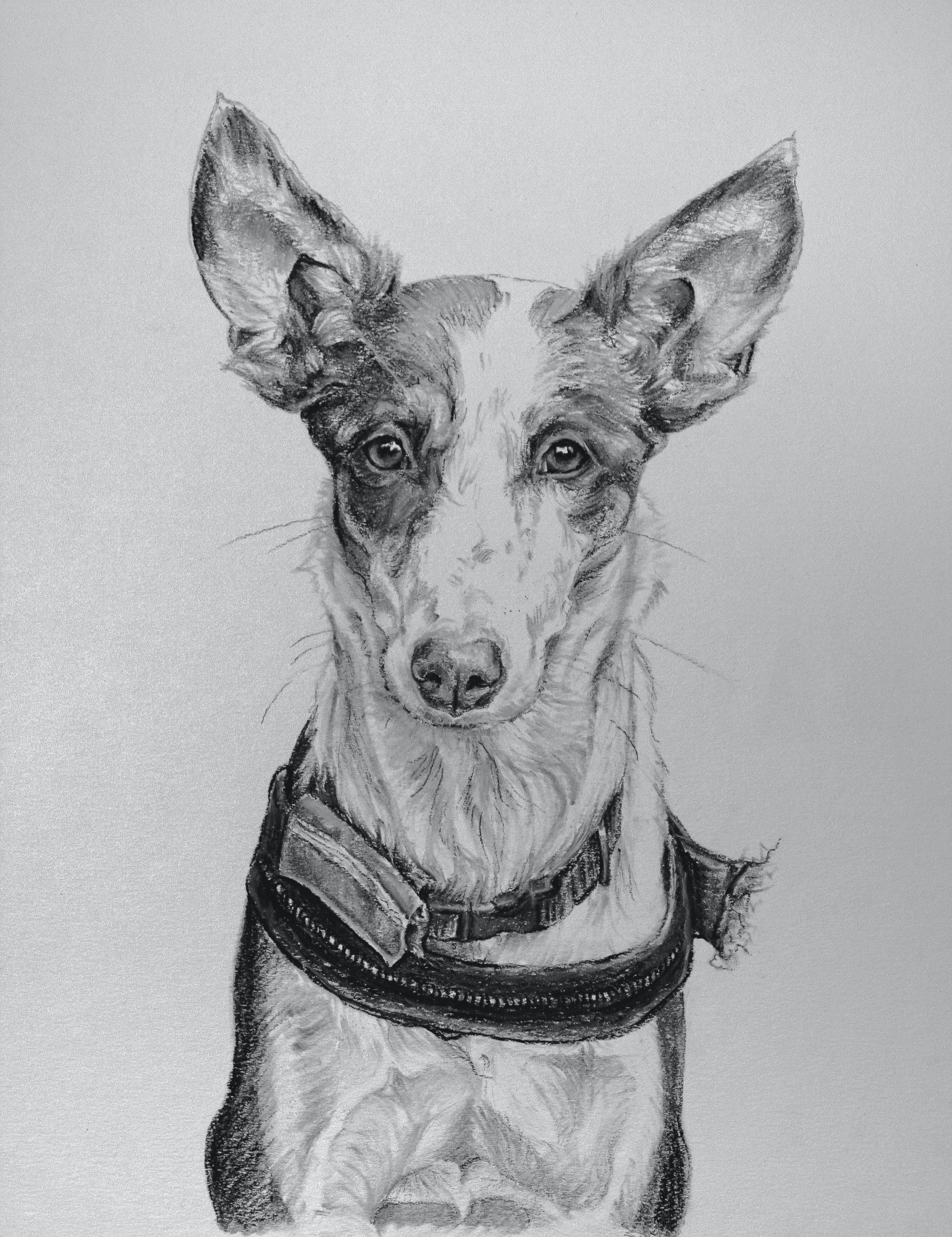 Amy Little Art - Charcoal Study