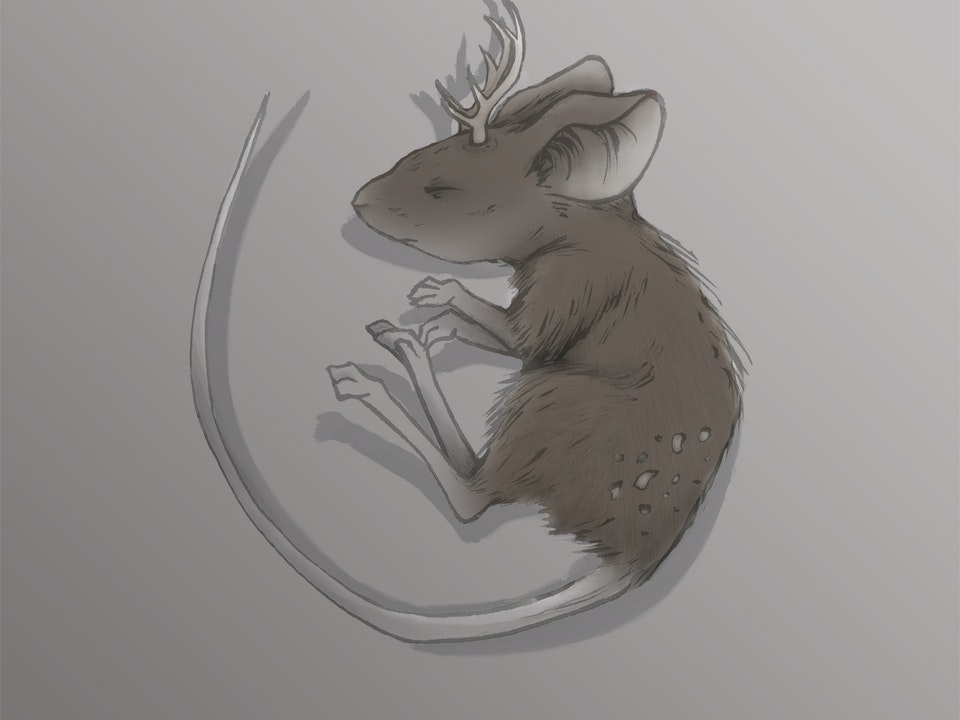"Illustration - ""Deer Mouse"" 2015. Ink & Digital."