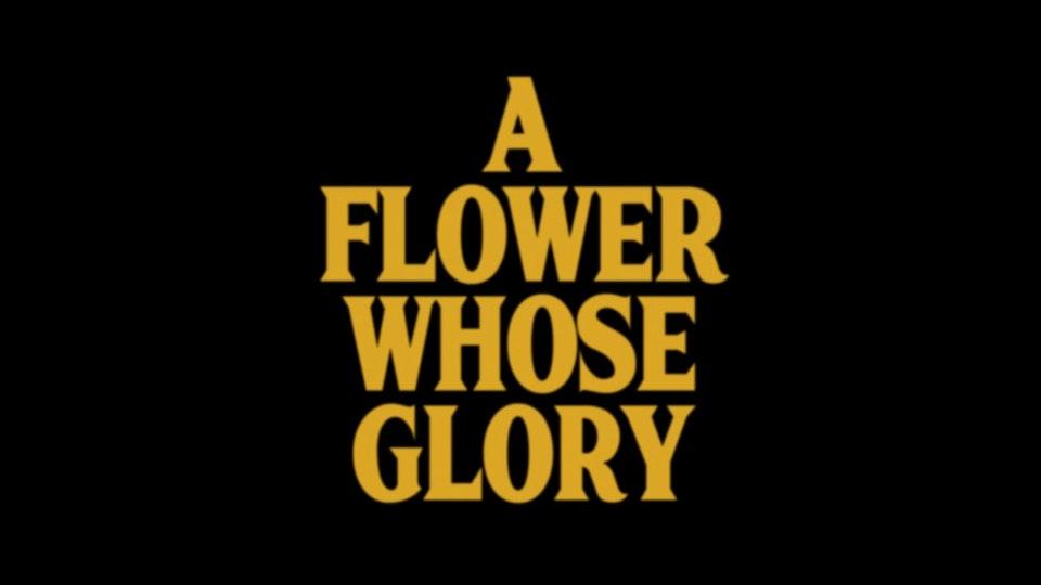 A FLOWER WHOSE GLORY