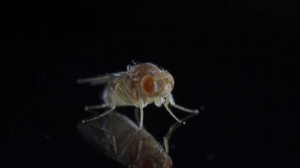The Question of Fruit Flies