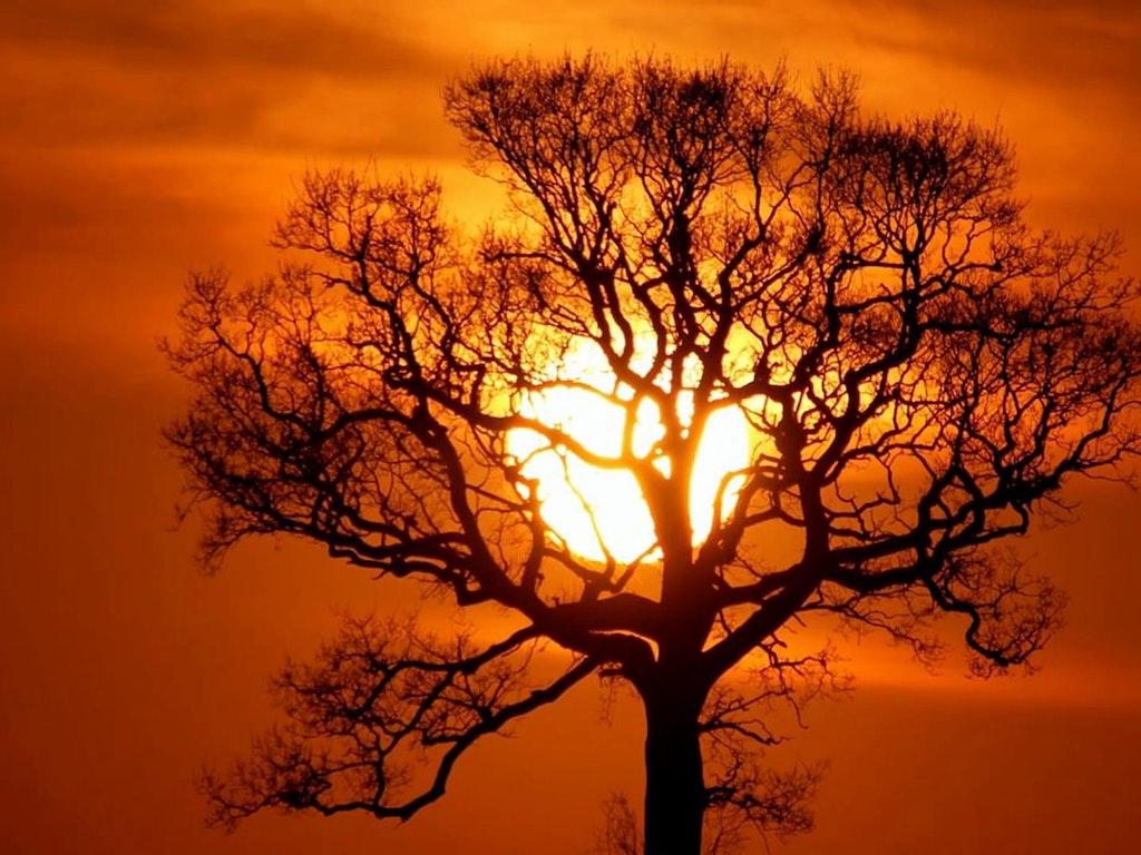 Return to Sunset Tree