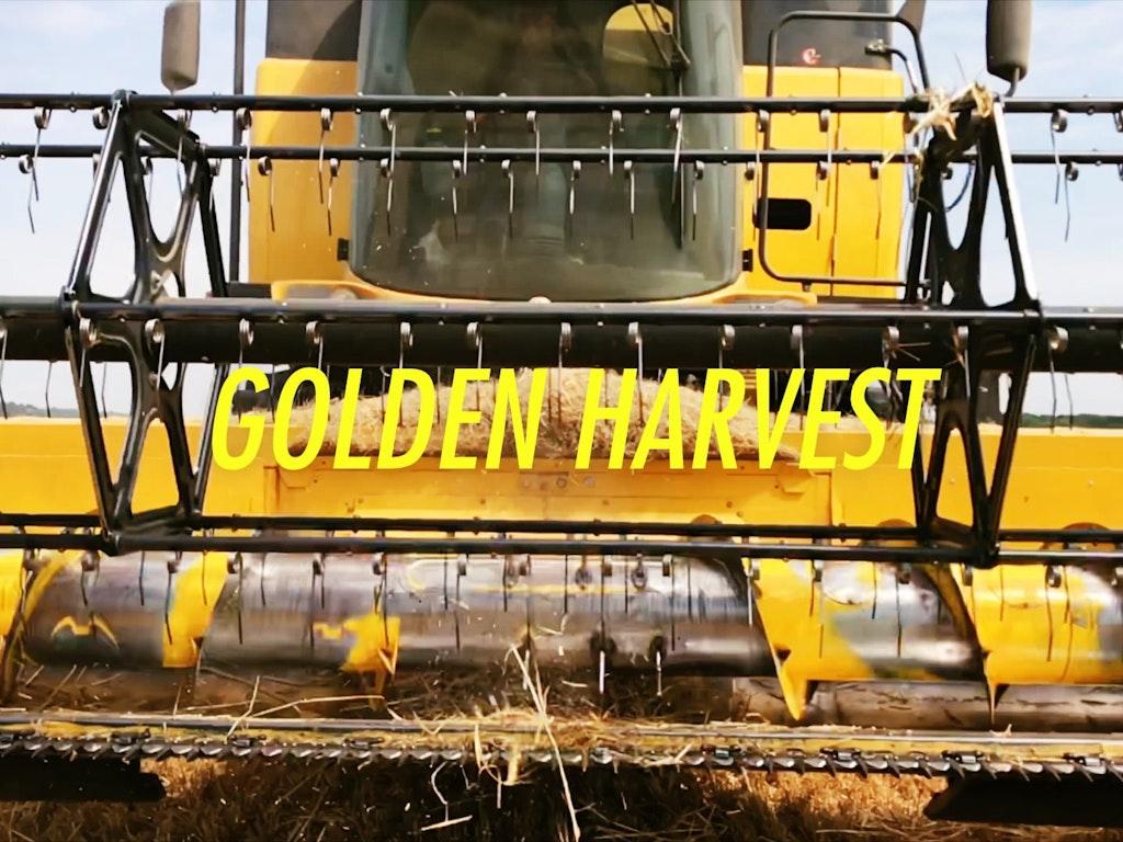 iGolden Harvest from my iPhone