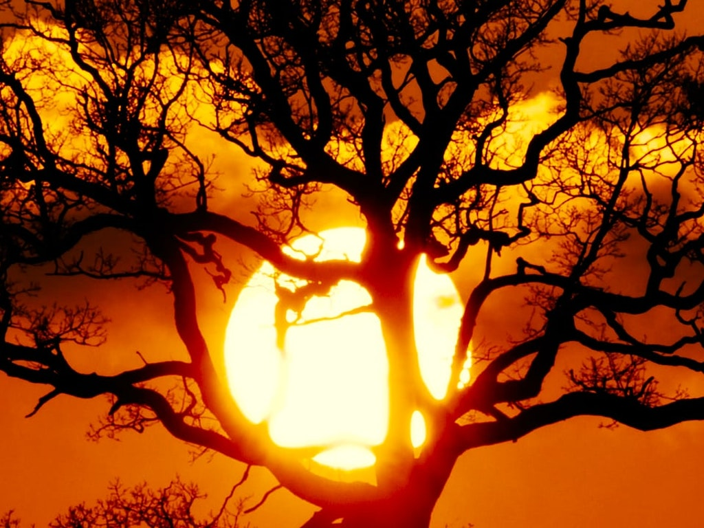 Be Sunset Tree